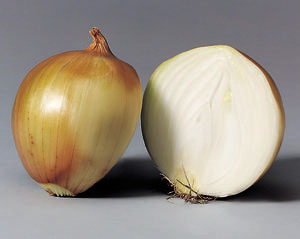 extracting onion dna Onion dna was extracted in four trials from the white variety (control variable) using two types of extraction materials (experimental variable.